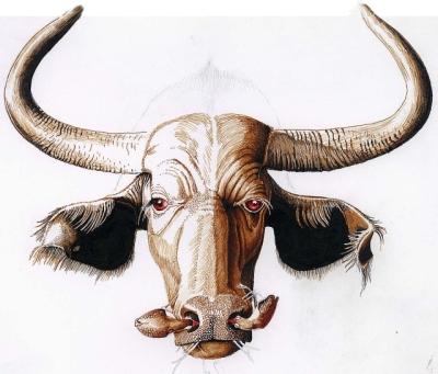 Animalizam u slikarstvu.. Bivol